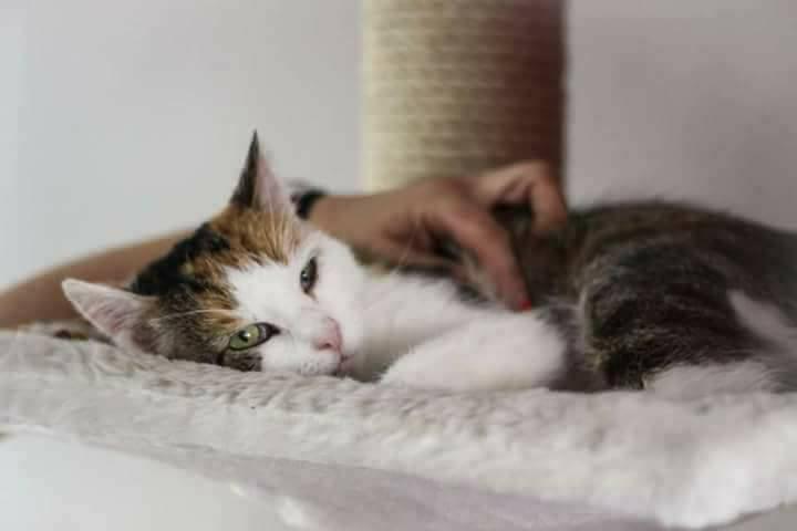 """Tier der Woche: """"Katze Tiffany"""""""