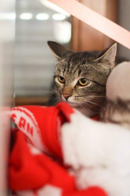 """Tier der Woche: """"Katze Sophie"""""""