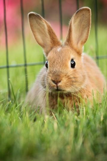 Haltung von Kaninchen