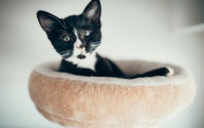 """Tier der Woche: """"Katze Mabel"""""""