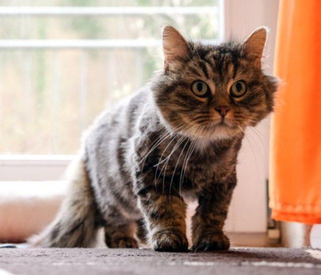 """Tier der Woche: """"Katze Cindy"""""""