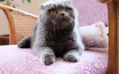 "Tier der Woche: ""Katze Leni"""