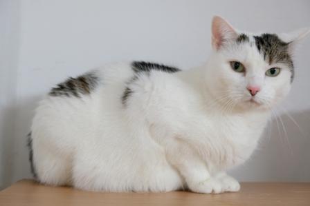 """Tier der Woche: """"Katze Hope"""""""