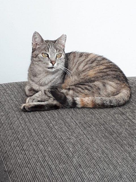 """Tier der Woche: """"Katze Lina"""""""