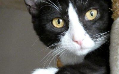 """Tier der Woche: """"Katze Antigone"""""""